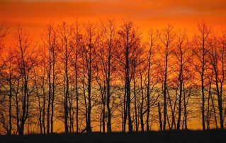 cropped-1-silhouette-of-trees-against-sunset-don-hammond.jpg