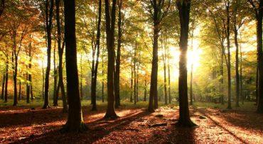 cropped-cropped-sunny-woodland.jpg