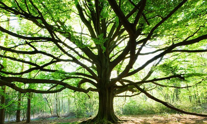 cropped-forestry-trees-gallery-be-004.jpg